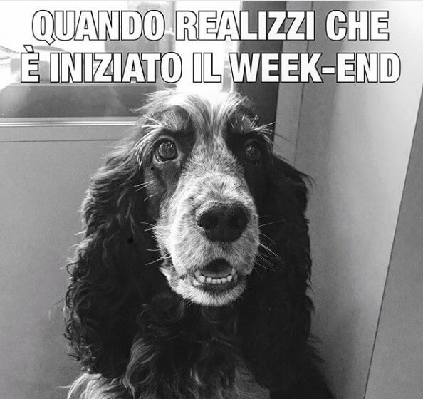 link buon weekend